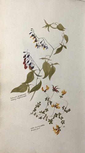 Manuscript Flora of Mid-Cheshire